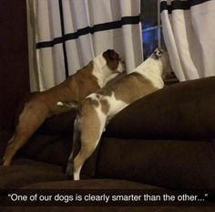 Check out: Animal Memes - Smarter dog. One of our funny daily memes selection. We add new funny memes everyday! Humor Animal, Funny Animal Memes, Cute Funny Animals, Funny Animal Pictures, Funny Cute, Funny Dogs, The Funny, Funny Memes, Funniest Pictures