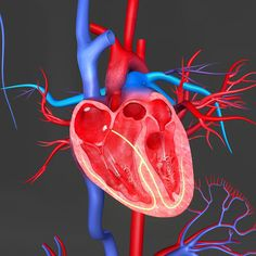 The first embryonic stem (ES) cell trial for severe heart failure is launching now in Paris.