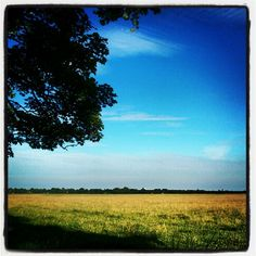"""Entered via Instagram by flossie1981 - My entry for #WinningView - """"Picture of the Town Moor which is an amazing piece of green land in the heart of #MyNE"""" #NEfollowers #WinningView"""