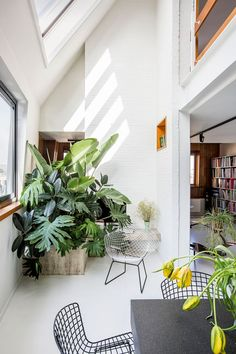 A few of my favorite things: house plants... or should I say GIANT house plants, a library style bookshelf and architecture and design with subtle throwbacks to the 70's. Big open bright spaces, books, and plants. What else could anyone ask for?