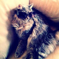 That's one COOL, cool cat...