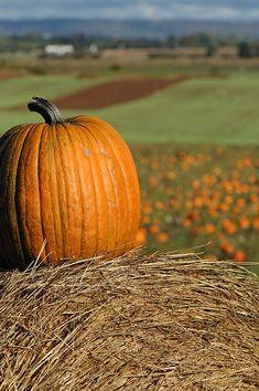 Anne Of Green Gables, Pumpkin, Autumn, Color, Pumpkins, Fall Season, Colour, Fall, Squash