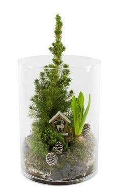 Christmas Flowers, Christmas Tree, Terrarium Diy, Terrariums, Deco Floral, Art Floral, Decoration Originale, Creation Deco, Yule