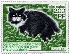 Felis catus | French Southern and Antarctic Territories , 1994 |  designed and engraved by Jacques Combet