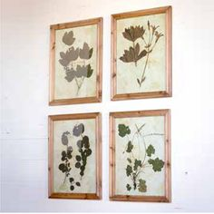 Three of this set of four oversized botanical prints framed the wall over a beautiful antique church bench in the season-2 BrHouse makeover on Fixer Upper.rRealistic detailed prints ...