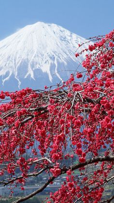 Vernal equinox in Japan, japan, sakura, mountains