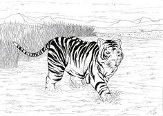Tiger by Kyan0s on deviantART