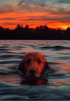 Weekend on the Lake (Classy Girls Wear Pearls) Cute Baby Animals, Animals And Pets, Funny Animals, Cute Dogs And Puppies, I Love Dogs, Doggies, Labrador, All Nature, Dog Photography