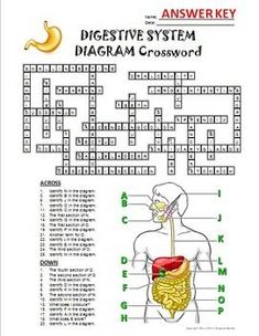 Mitosis crossword with diagram editable teaching pinterest digestive system crossword with diagram editable ccuart Images