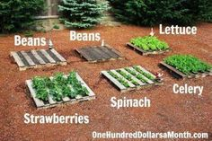 How To Start A No Fuss Vegetable Pallet Garden | Health & Natural Living