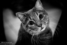 Full Eyes Aperture