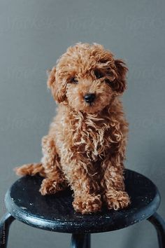 Taking Puppy Photos - Tips You Can Use! - Taking Puppy Photos - Tips You Can Use! - Animals - Dogs pictures Taking Puppy Phot - # Animals Cavapoo Puppies, Goldendoodles, Mini Goldendoodle, Labradoodles, Maltipoo, Labradoodle Puppies, Puppys, Toy Cockapoo, Golden Labradoodle
