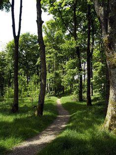Rais Wood between Hubberholme & Yockenthwaite, Langstrothdale (Upper Wharfedale), #Yorkshire_Dales National Park, #England.