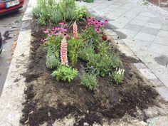 Ganz frisch eingepflanzt Urban Gardening, City, Plants, Fresh, Flora, Apartment Gardening, City Drawing, Plant, Cities