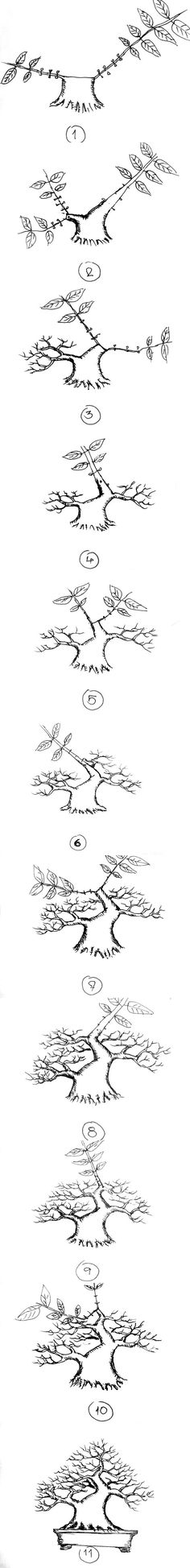 Bonsai evolution (original source: https://goo.gl/nhE7Ln):