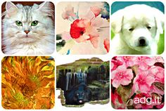 Dipingere fiori e animali: workshop di pittura a Firenze