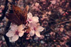 Sascha D. Plants, Photography, Pink Blossom, Photograph, Fotografie, Photoshoot, Plant, Planets, Fotografia