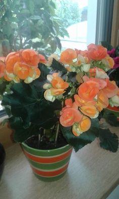Elena Mirghis - Google+ Google, Plants, Plant, Planets