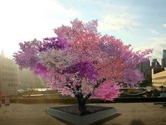 A Tree Grows 40 Different Types of Fruit | Innovation | Smithsonian   A tree that Sam Van Aken grows might look like any other—until it blooms. First, its branches blossom in different shades of pink, white and crimson, and then, quite magically, the tree displays a mix of fruit.  Van Aken's Tree of 40 Fruit, an invention that's just what it sounds like, is capable of producing 40 different varieties of fruit—plums, peaches, apricots, nectarines, cherries and others.