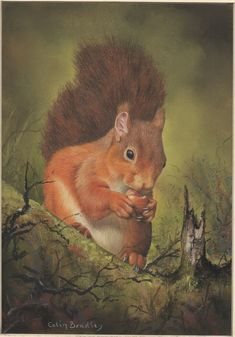 Our First Giclée Print! Would you like a print of Colin's Red Squirrel artwork hanging on your wall? Each print is printed on Hahnemuhle Photo Rag 308gsm Fine Art Paper. We also use an Epson Ultra Chrome HDX ink set which utilises 10 newly developed high-stability pigment inks.