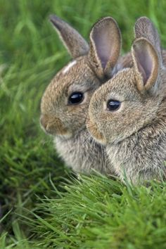 chasingrainbowsforever:Bunny Rabbits