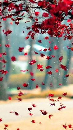 Desktop Background Pictures, Blur Photo Background, Studio Background Images, Banner Background Images, Background Images For Editing, Flower Background Wallpaper, Photo Backgrounds, Picsart Background, Photo Background Images Hd