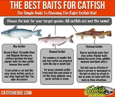 Best Catfish Bait: The Top 5 Catfish Baits Made Simple The best catfish bait for each catfish species made. Good Catfish Bait, Catfish Rigs, Blue Catfish, Catfish Fishing, Fishing Rigs, Pike Fishing, Bass Fishing Tips, Crappie Fishing, Fishing Guide