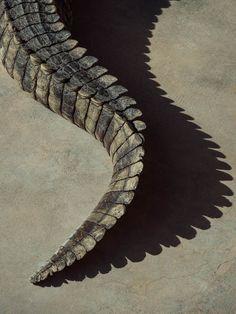 Dragon Inspiration : Photo