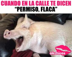 No puedo con esto! Power Girl, Laughter, Funny Memes, Lol, Quotes, Projects, Diy Dog, Funny Images, Hilarious Pictures