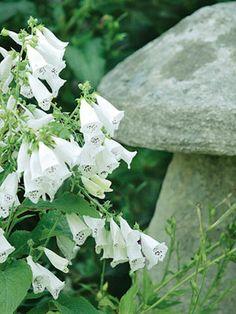 white flowers next to a stone stool