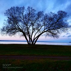 The tree  by mejciz. @go4fotos