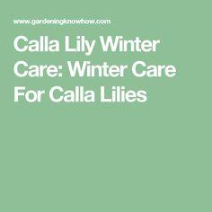 Calla Lily Winter Care: Winter Care For Calla Lilies