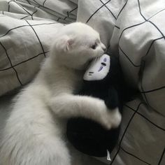 Find and save cute animal memes plus explore images of animals in their habitats. Create animal collections with pets, in the wild or under the sea. I Love Cats, Crazy Cats, Cute Cats, Funny Cats, Animals And Pets, Baby Animals, Cute Animals, Image Originale, Cat Aesthetic