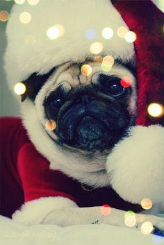 Christmas puggy :)