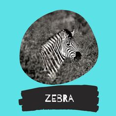 Zebra - A creative board filled with zebra art. Because my own brand is called zebra soul art, easy! Whenever I see funny, creative, zebra paintings, drawings or zebra costumes, I will save them here. Zebra Art / Zebra DIY / Zebra Costume / Everything Zebra