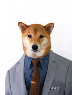 Exclusive First Look: Menswear Dog x The Tie Bar The Tie Bar teams up with MWD to bring you their latest and greatest in anticipation for our appearance at their Project Show NYC booth next. Fluffy Animals, Cute Animals, Menswear Dog, Dog Presents, Dog Day Afternoon, Japanese Dogs, Shiba Inu, Akita, Cute Pictures