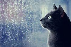 I love cats.....