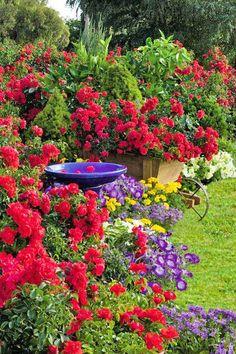 Colorful Garden!