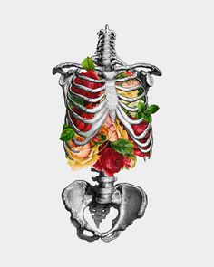 Creative Anatomy, Love, Creativity, Illustration, and Skeleton image ideas & inspiration on Designspiration Flowers Illustration, Illustration Art, Botanical Illustration, Medical Illustration, Inspiration Art, Art Inspo, Anatomy Art, Anatomy Bones, Gcse Art