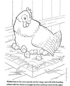 Farm animal coloring page - Chickens to print and color