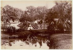 Royal Botanic Gardens (Sydney, N.S.W.), c. 1900-1910 | Flickr - Photo Sharing!