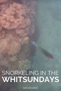 Fear, fish, and floating: my first time snorkeling in the beautiful Whitsunday Islands of Queensland, Australia.
