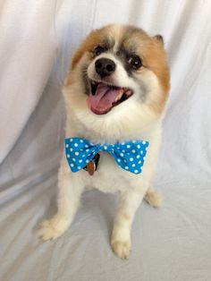 Blue Polka Dot Dog Bow Tie by LizzyAndMeekoShop on Etsy b74261e84