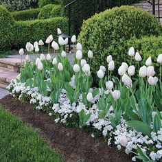 the garden - bulbs dress up a spring border
