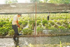 Permaculture Farming, Hydroponics, Farmer, Japanese, Business, Japanese Language, Hydroponic Gardening, Farmers, Store