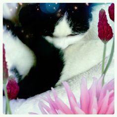 Let sleeping cats lie. @4696neko-#cameran #cameranapp