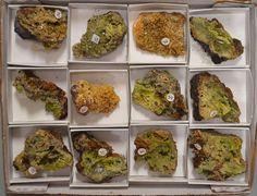 12 Pc Rare Green and Yellow Mimetite Specimen Half Flat Ojuela Mine Mapimí Mex