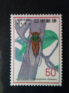 蝉 Insect Cicada