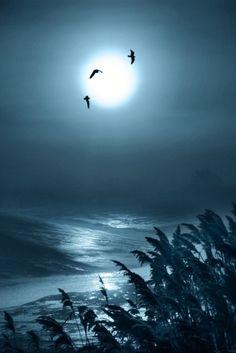 """0ce4n-g0d: """" Lunar Light!   Adrian """""""