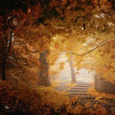 trees Turn to Fall by Ildiko Neer on 500px